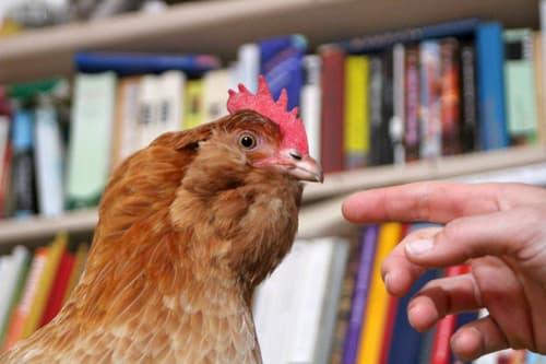 Ida mit ihren Büchern lernt wie man tiergestützt arbeitet