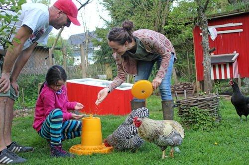 Richtiger Umgang mit den Hühnern. So geht's